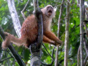 Unhappy monkey.