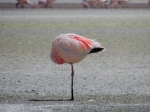 Flamingo Yoga