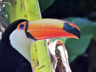 One toucan.